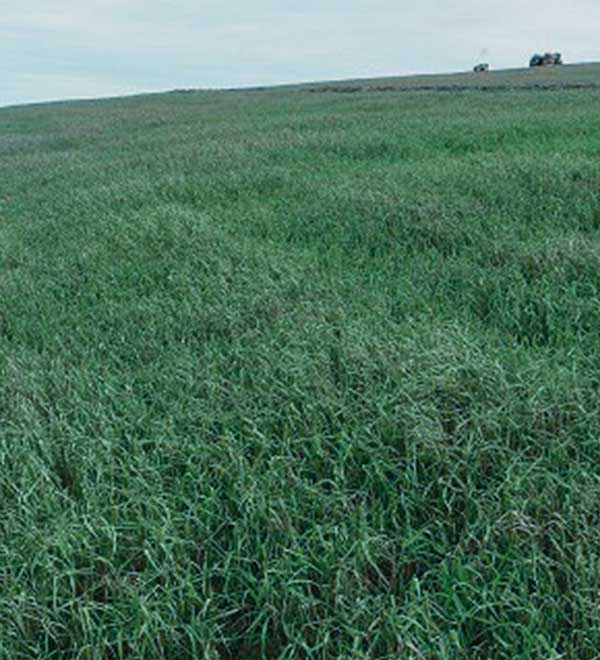 Large-Scale Regrowth & Dust Suppression